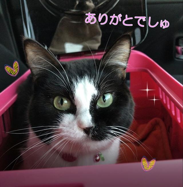猫ムスビ、うちの子2年記念日&誕生日♪