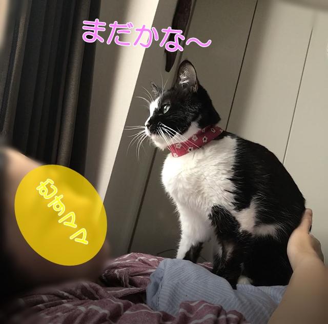 鼻詰まりの猫のゴロゴロはピルピルである