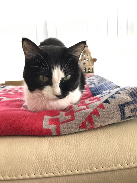 洗濯物を干すのをダメという猫