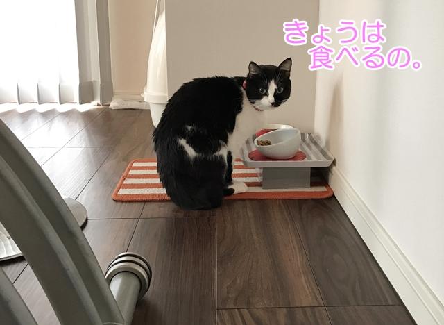 えさを食べない猫