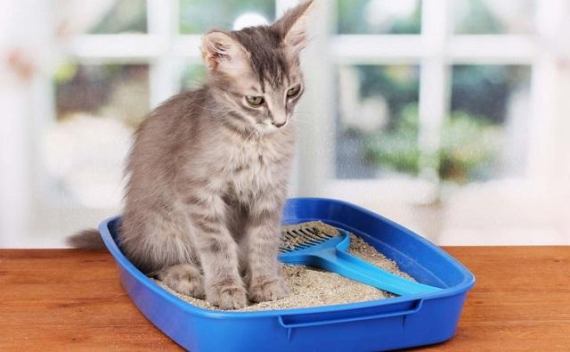 猫の便秘にオリーブオイルと綿棒?量や飲まない場合の対処法