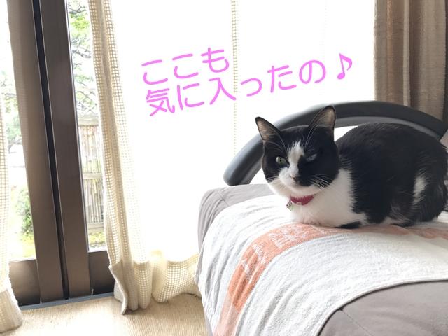 猫ムスビのGW2017~実家に帰省!~