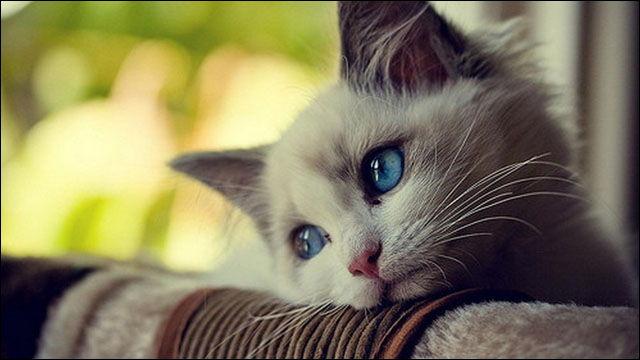 猫の便秘は何日まで大丈夫?病院は何日目から?
