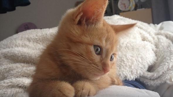 茶トラ猫は飼いやすい?性格と特徴【雑種日本猫の種類】