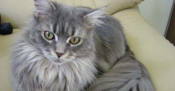 猫の種類一覧、日本で人気は長毛種?飼いやすいのは雑種?