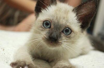 ネコ性格、人になつかない種類は?気難しい猫との付き合い方