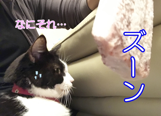 おひざが大好きな猫…夏はどうなることやら