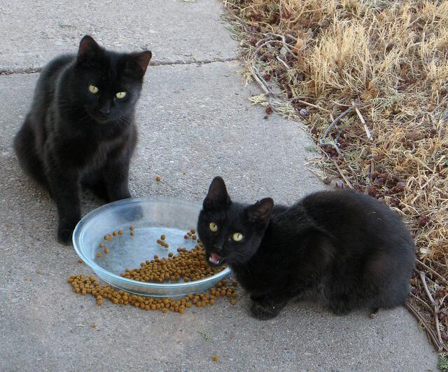 猫の便秘解消フードおすすめ! ウェットやロイヤルカナン、ヒルズどれがいい?