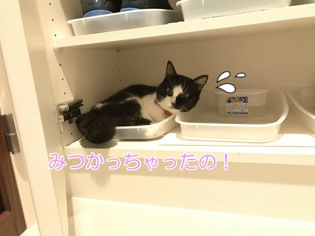 猫が隠れるのは体調が悪いサインかも!?腎臓病猫ムスビ