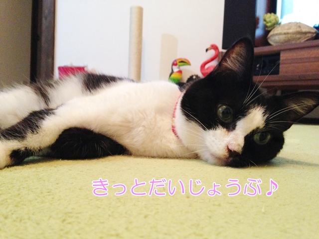 沖縄の保護ネコカフェ(ニャングスク)でブログ読者さんに会った話