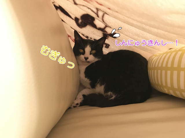 おむすびさんトライアル日記②おひざ訓練にきんちょうする猫
