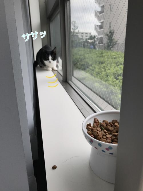 おむすびさんトライアル日記④猫「アンッ」人「はーい」のかけあい🍙