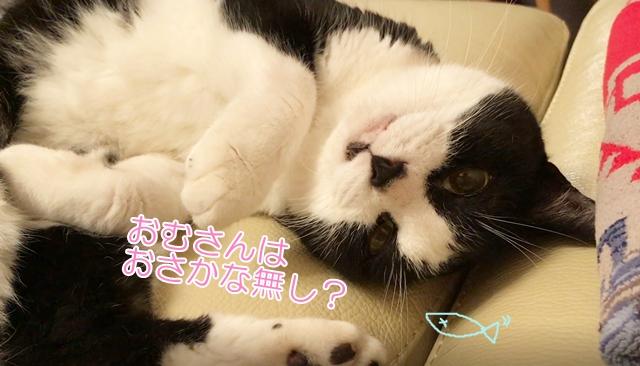 おむすびさんトライアル日記⑨猫の窓用ハンモック(二段ベッド)を取り付けてみた