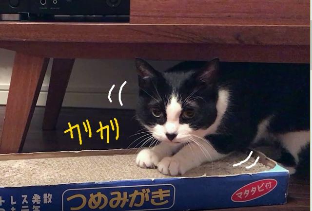 猫型つめとぎは可愛いだけじゃなく使い勝手も良い♪