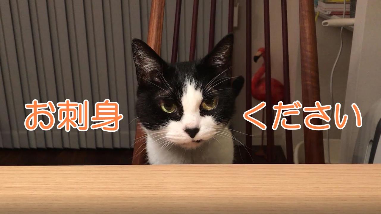 お刺身を欲しがる猫がうるうる訴えてくる…