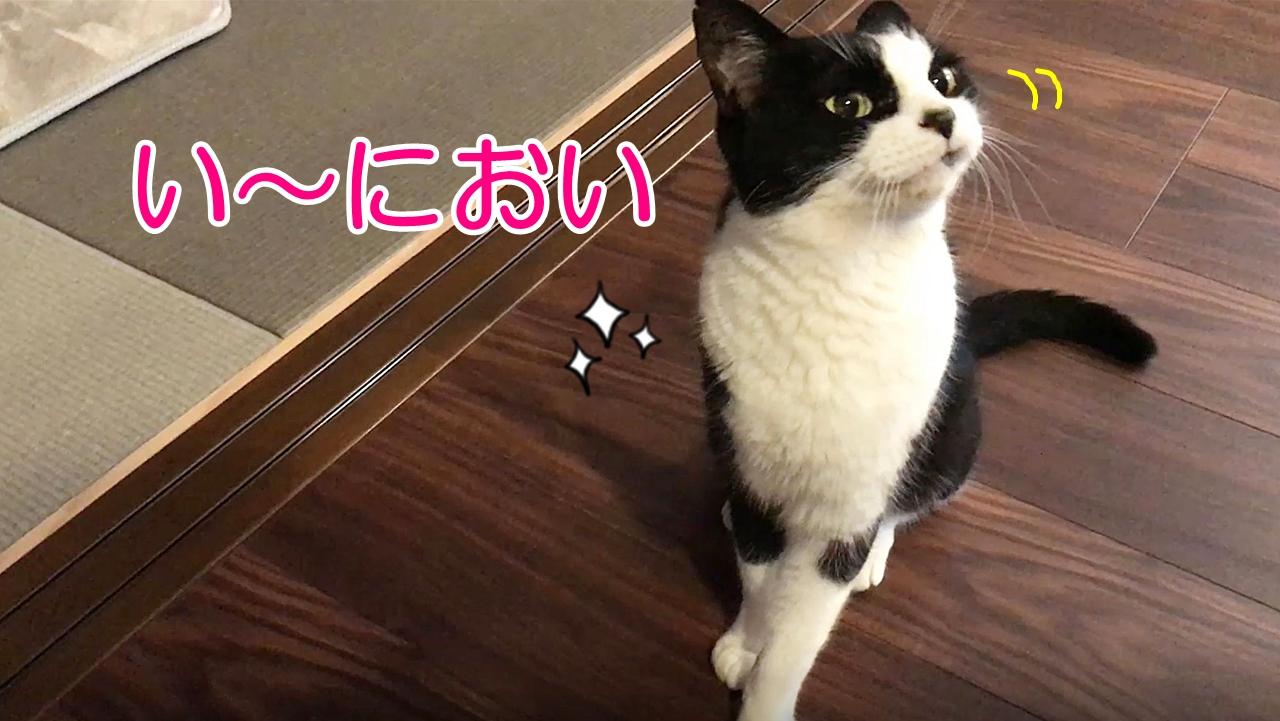 焼きかつおは、やっぱり猫さんに大人気だった!!