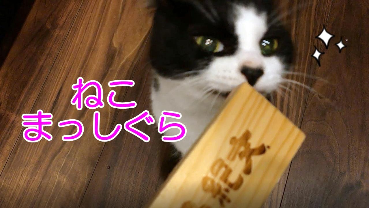 紀文のちゅ~るに大興奮の猫
