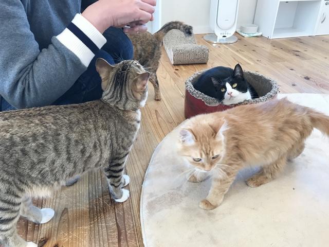 保護猫サロンで猫まみれ!