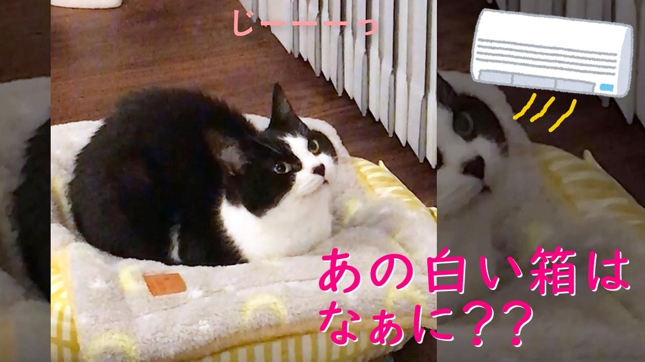 エアコンを初めて見る?猫おむすびさんの反応w