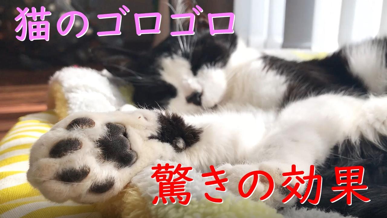 猫のゴロゴロ音には、科学的に癒しの効果があるらしい?