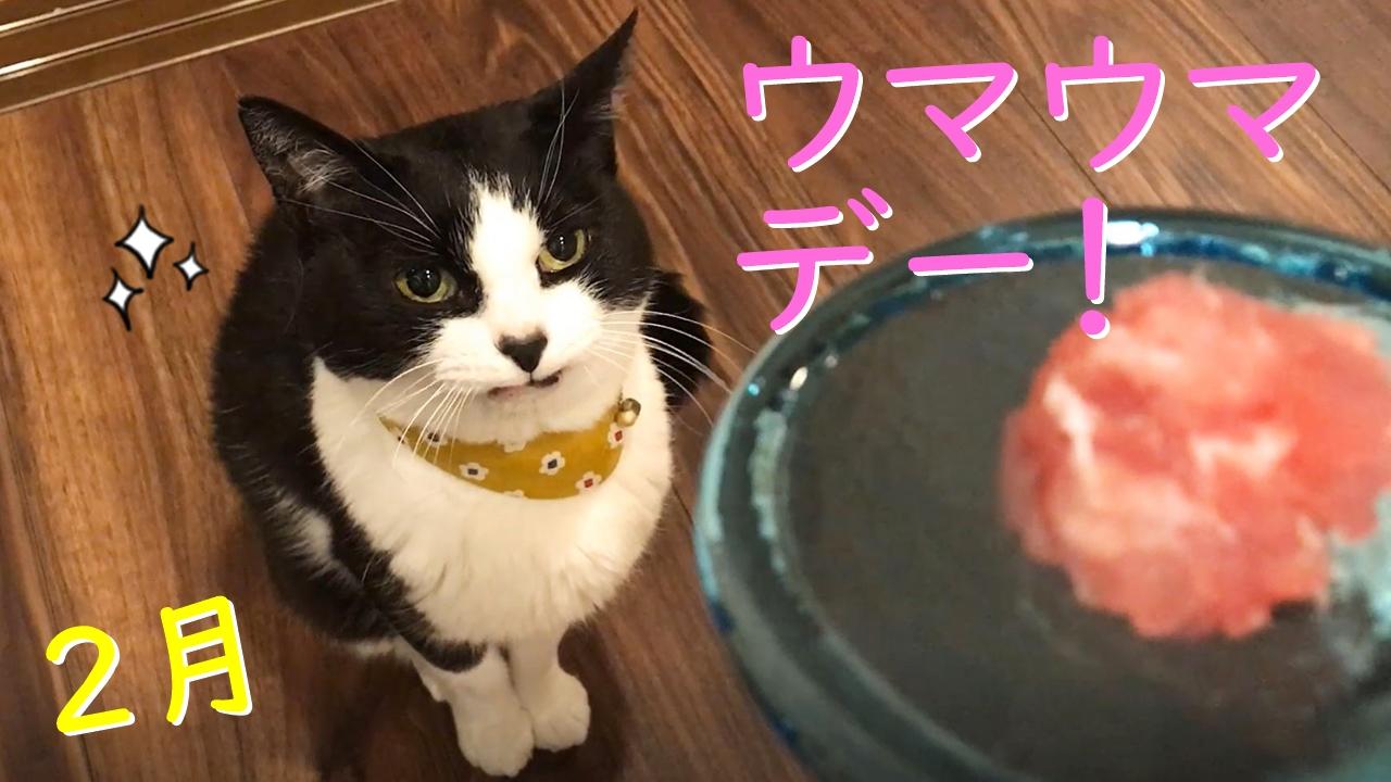 2月のウマウマデー【生マグロ&アヒポキ丼】