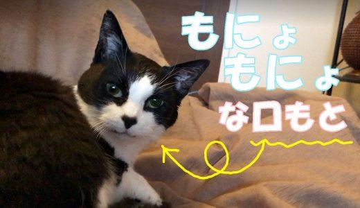 うちの猫のベンツマーク鑑賞会(見放題さわり放題)
