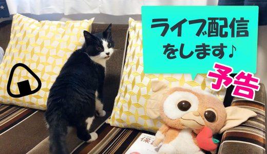 YouTubeライブ配信「居酒屋おむすび」開店予定のお知らせ