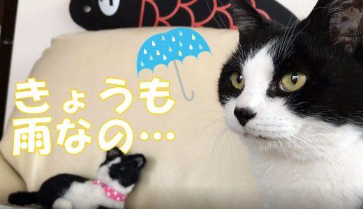 朝からよく喋る猫おむすびさん、お天気悪くて不満げ…?