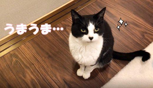 4月のウマウマデー【タラのアクアパッツァ風】猫のトッピングごはん♪
