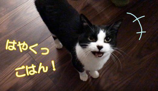 うにゃうにゃと御飯処まで先導する猫おむすびさん