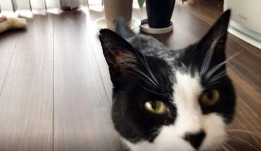 お返事上手な猫おむすびさんと朝の会話
