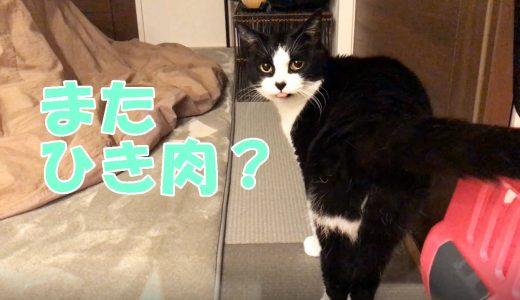 茹でたひき肉を熱々で食べた猫おむすびさん