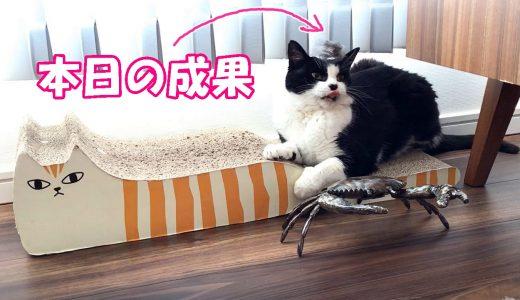 猫おむすびさんをキッチンペーパーで磨きます