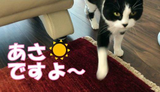 休日の朝、起こしにきた猫おむすびさん
