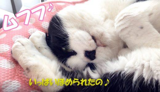 猫はどう呼んだら喜ぶの?しっぽで感情測定♪