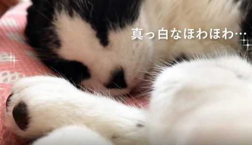 猫のお手てフェチさんのための動画です🐈🐾