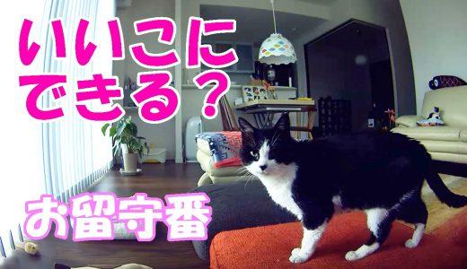 お留守番中の猫を盗撮してみました🐈
