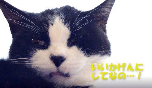 猫に心底嫌そうな顔をされてしまった件…😹