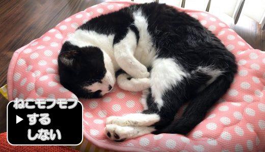 寝ている猫をモフモフせずにいられますか…