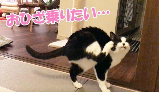 猫がお膝に乗りたそうに こちらをみている…🐱
