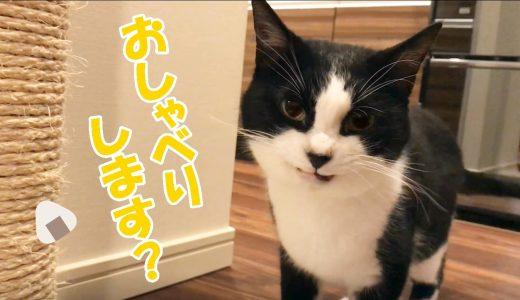 おしゃべり猫おむすびさんと夕方の会話😺