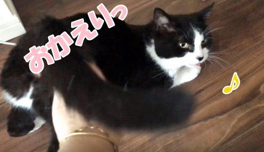 しゃべる猫おむすびさんのお留守番「おかえり!」「ヤッターーーー↗↗↗」