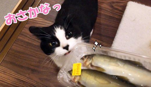 猫おむすびさん、鮎にウマウマ舌鼓🐈🎶