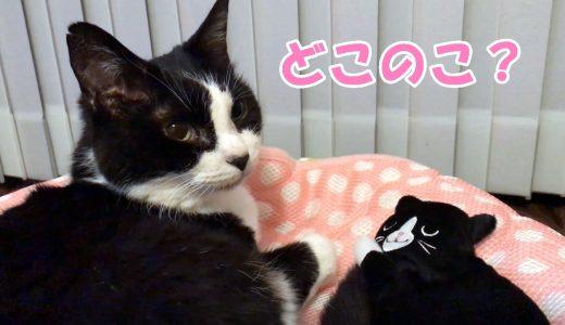 おむすびさんソックリ?黒白猫の新入り🐈🎶