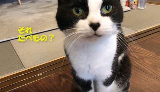 猫にイクラをあげてみたら…?🍣