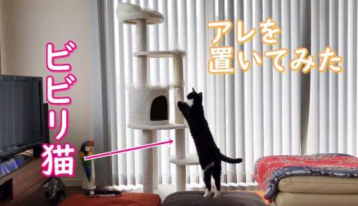 ビビリな猫をキャットタワーに誘導する方法♪