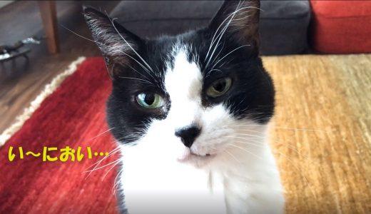 猫「モスバーガーください…」🍔