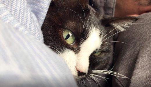 パパにべったり添い寝する猫【ムスビ蔵出し動画】