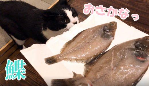 白身魚をウマウマした猫おむすびさん【鰈の煮つけ】
