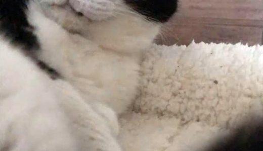 猫のASMR動画に挑戦、おむすびさん😺🎶